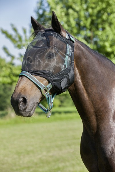 Fly veil, without ear protection